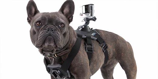 gopro-hund-harness-2
